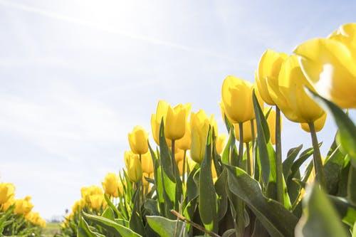 Horoscop vineri, 23 aprilie. O zi plină de magie!